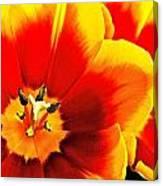 Tulip Intimacy Canvas Print