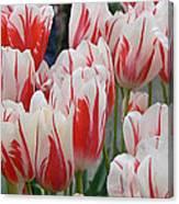 Tulips 8 Canvas Print
