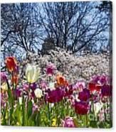 Tulips At Dallas Arboretum V94 Canvas Print