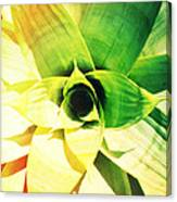 Tunnel Of Green Canvas Print