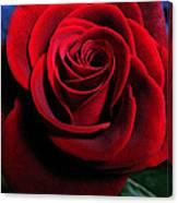 Twilight Rose  Canvas Print