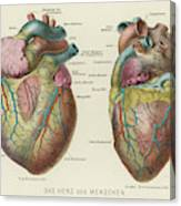 Two Views Of The Heart, With  The Parts Canvas Print