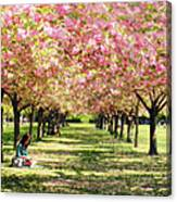 Under The Cherry Blossom Trees Canvas Print