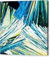 Urea Or Carbamide Crystals In Polarized Light Canvas Print