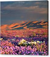 Usa, California, Dumont Dunes Canvas Print