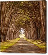Valiant Trees Canvas Print