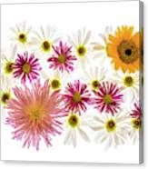Variety Of Flowers Against White Canvas Print