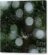 Venusta Orchard Spider Canvas Print