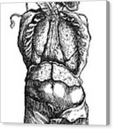 Vesalius: Thoracic Cavity Canvas Print