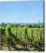 Vineyard, Alsace, France Canvas Print