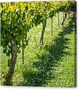 Vineyard Farm Canvas Print