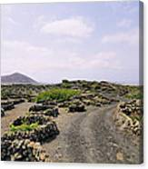 Vineyard On Lanzarote Canvas Print