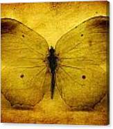 Vintage Grunge Butterfly Canvas Print