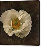 Vintage White Poppy Canvas Print