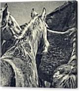 Waiting Horses Canvas Print