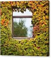 Wall Overgrown With Fall Colored Vine And Ivy Canvas Print