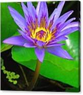 Water Lily 20 Canvas Print