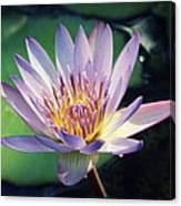 Blue Water Lily Canvas Print