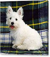 West Highland White Terrier Puppy Canvas Print