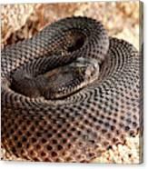 Western Diamondback Rattlesnake Canvas Print