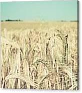 Wheat Crop Canvas Print