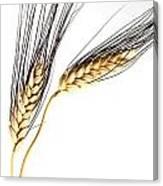 Wheat On White Canvas Print