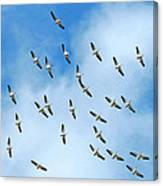 White Pelican Sky Canvas Print