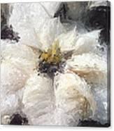 White Poinsettias Christmas Card Canvas Print