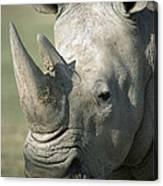 White Rhinoceros Portrait Canvas Print