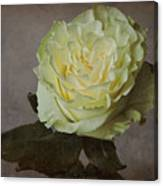 White Rose With Old Paper Texture Canvas Print