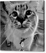 Who Could Resist This Puss Canvas Print