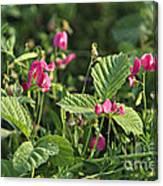Wild Grass Flower Canvas Print