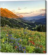 Wildflower Moonrise Canvas Print