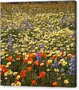 Wildflower Wonderland 9 Canvas Print