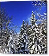 Winter Forest Under Snow Canvas Print