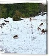 Winter Grazing Canvas Print