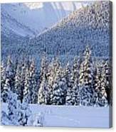 Winter Scenic Of Snowcovered Spruce Canvas Print