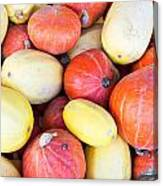 Winter Squash Canvas Print