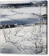 Winter Stream, Jasper National Park Canvas Print