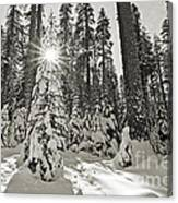 Winter Wonderland - Badger Pass In Yosemite National Park Canvas Print