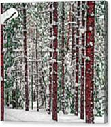 Winters Forest Canvas Print