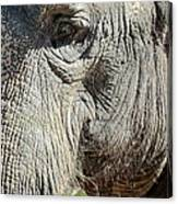 Wise One,elephant  Canvas Print