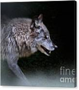 Wolf On The Prowl Canvas Print