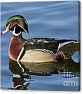 Wood Duck Drake Canvas Print