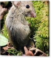 Wood Mouse Canvas Print