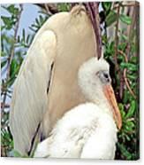 Wood Stork Mycteria Americana Canvas Print