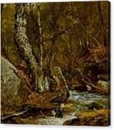 Woodland Interior Canvas Print