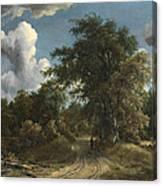Woodland Road Canvas Print