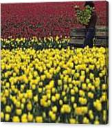 Worker Carrying Tulips Canvas Print