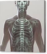 X-ray Skeleton Canvas Print